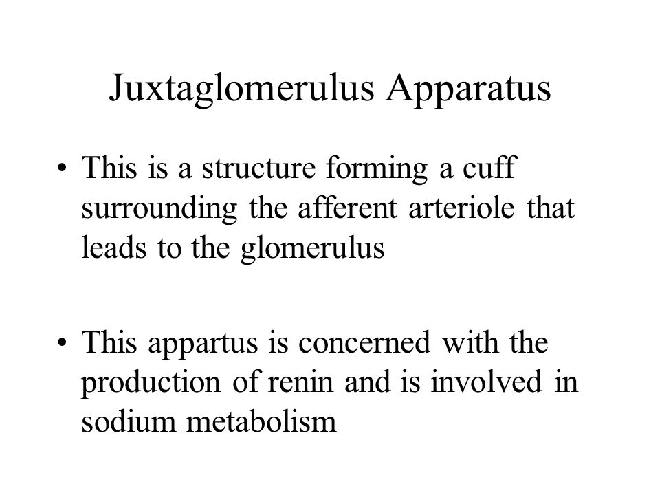 Juxtaglomerulus Apparatus