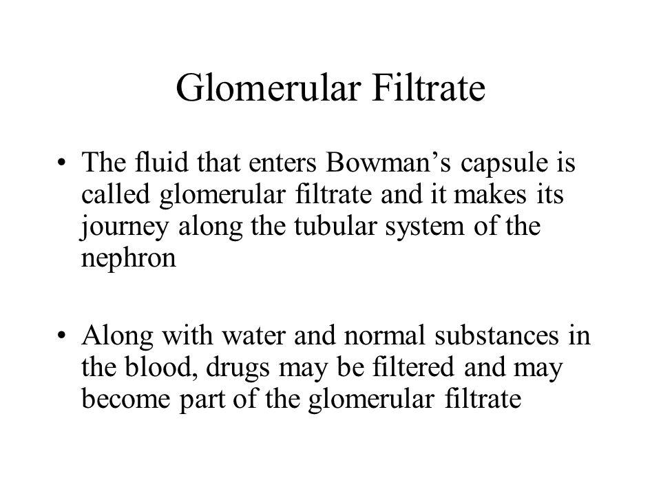Glomerular Filtrate
