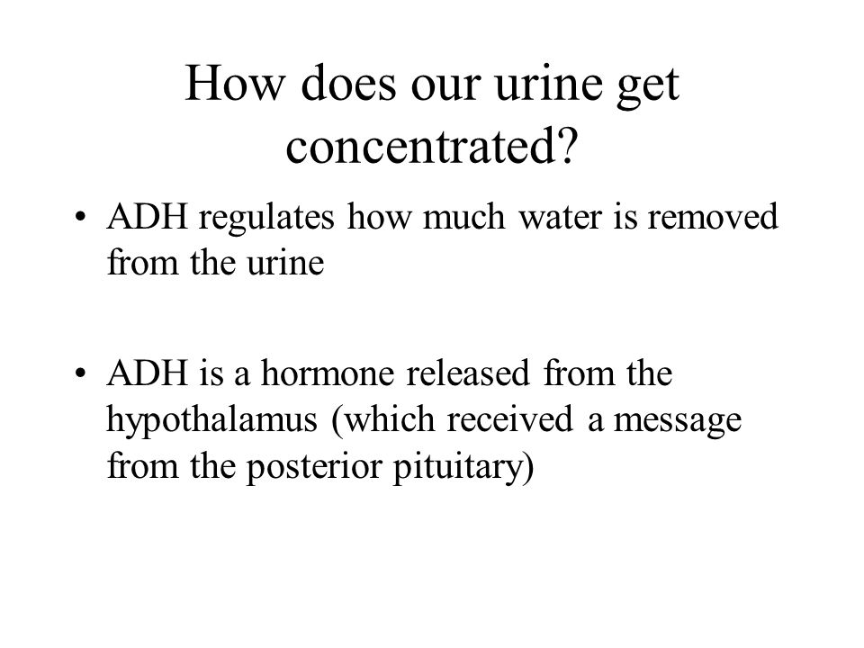 How does our urine get concentrated