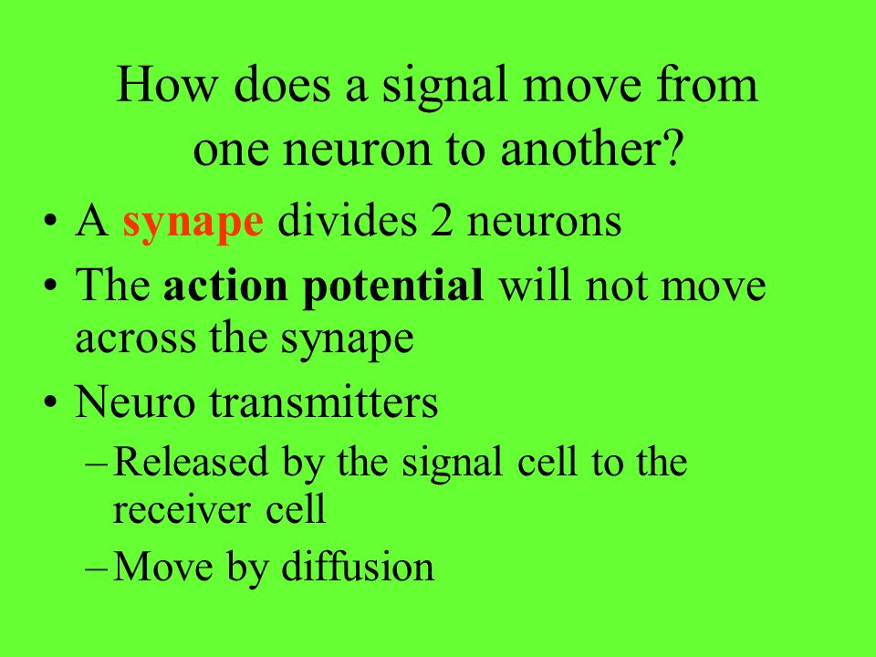 How does a signal move from one neuron to another