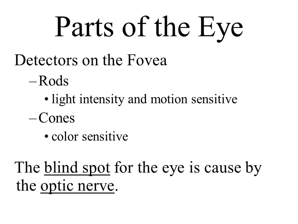 Parts of the Eye Detectors on the Fovea