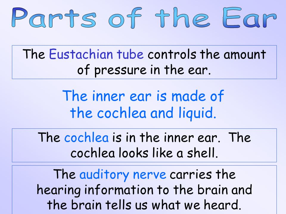 The inner ear is made of the cochlea and liquid.