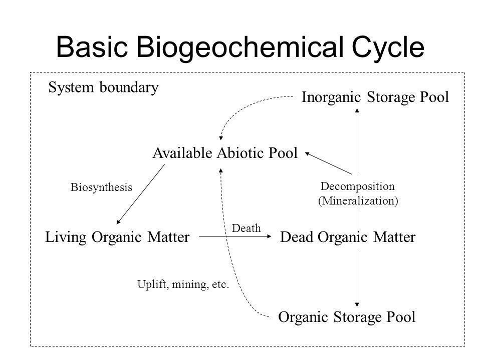 Basic Biogeochemical Cycle