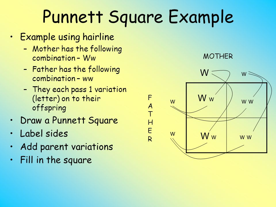 What Does A Capital Letter Represent In A Punnett Square