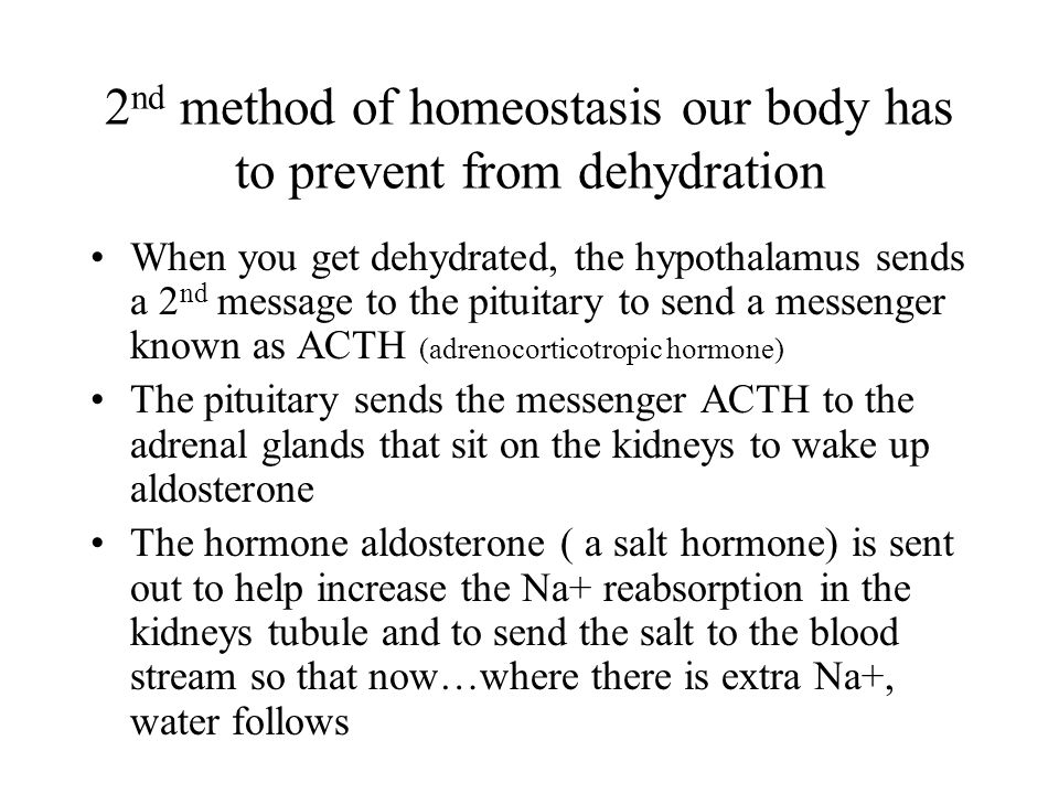 2nd method of homeostasis our body has to prevent from dehydration