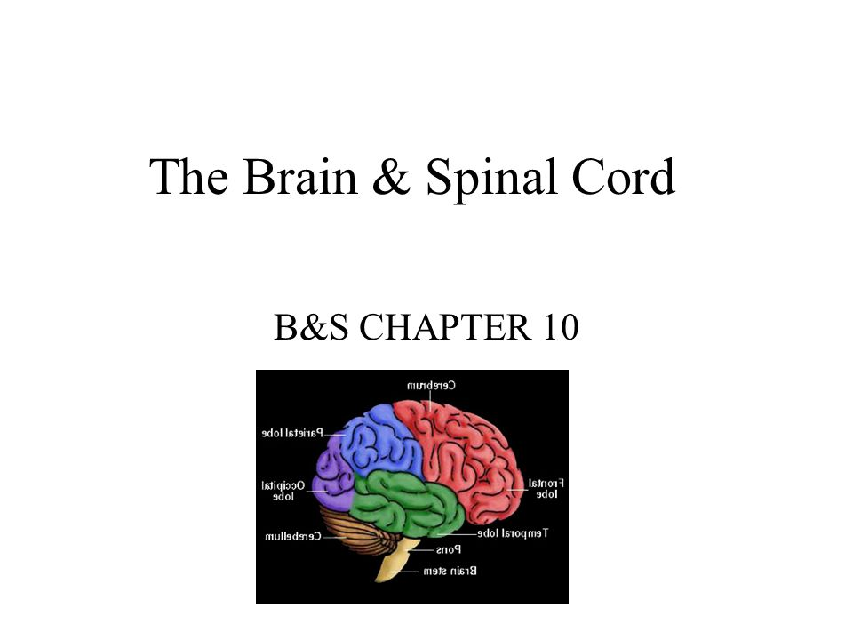 The Brain & Spinal Cord B&S CHAPTER 10