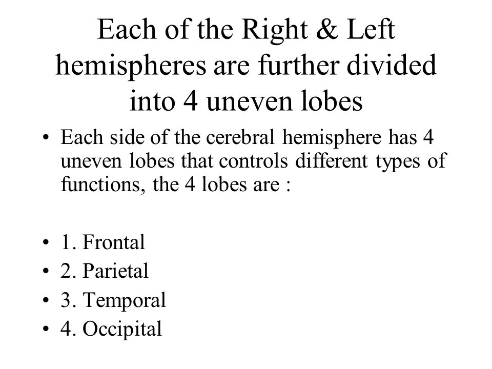Each of the Right & Left hemispheres are further divided into 4 uneven lobes