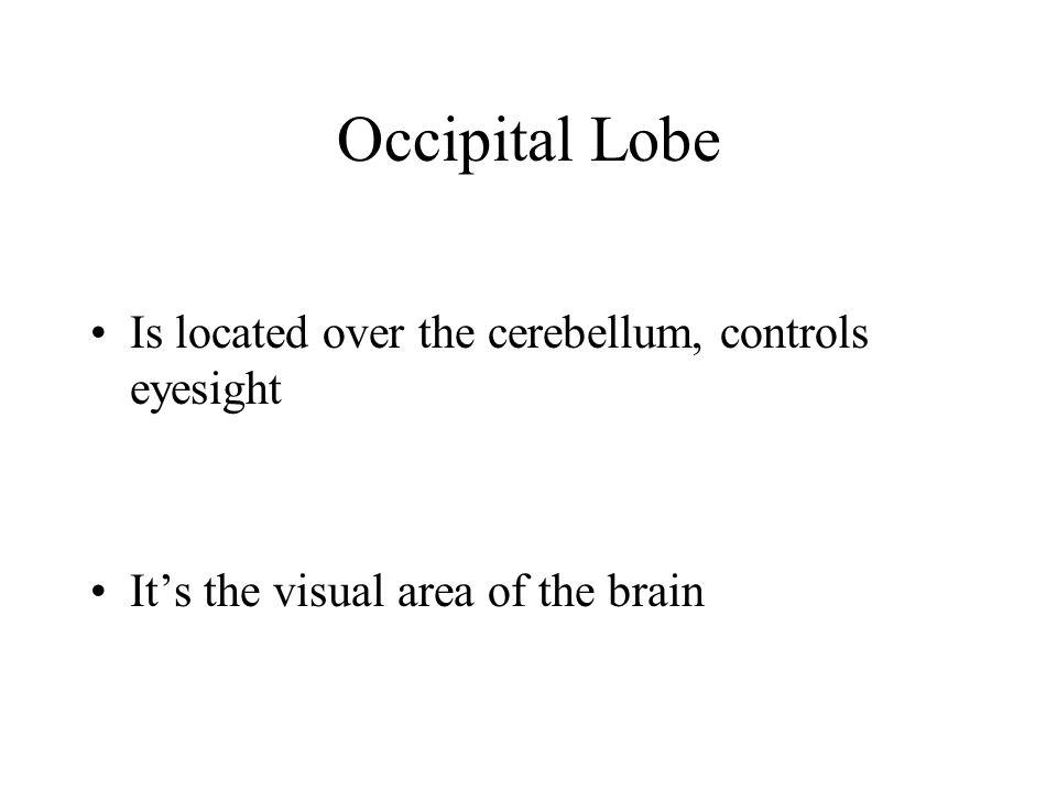 Occipital Lobe Is located over the cerebellum, controls eyesight