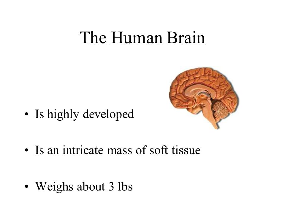The Human Brain Is highly developed