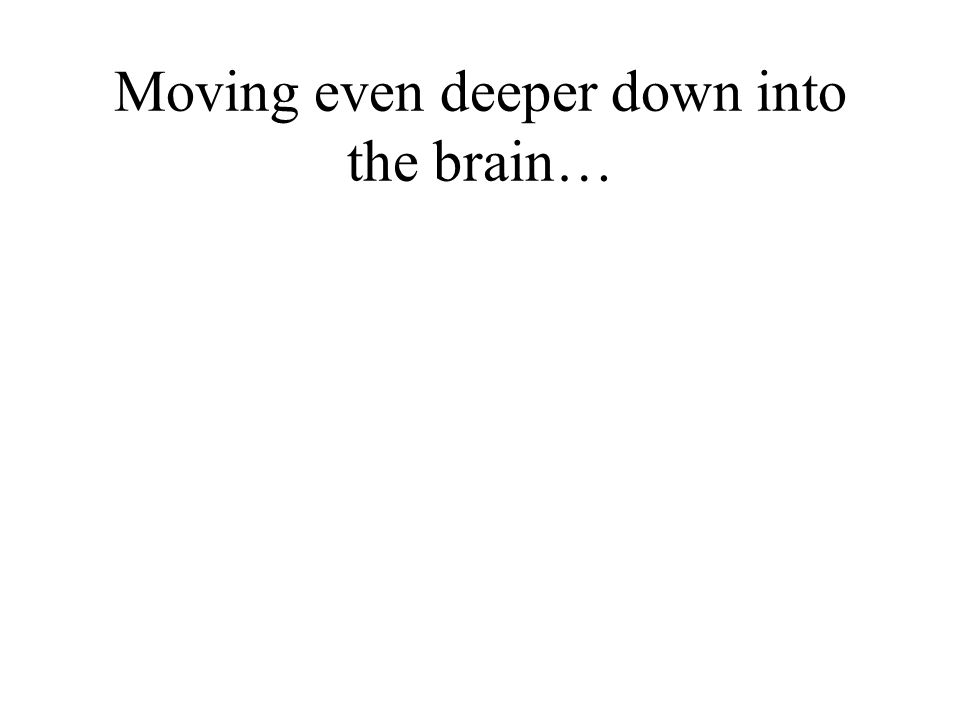 Moving even deeper down into the brain…
