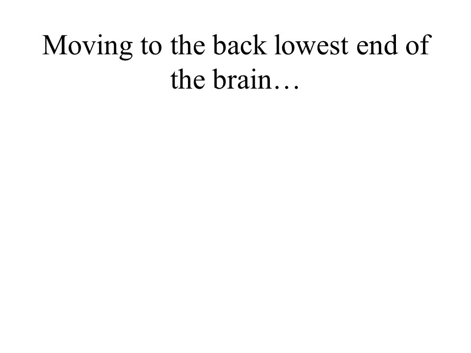 Moving to the back lowest end of the brain…