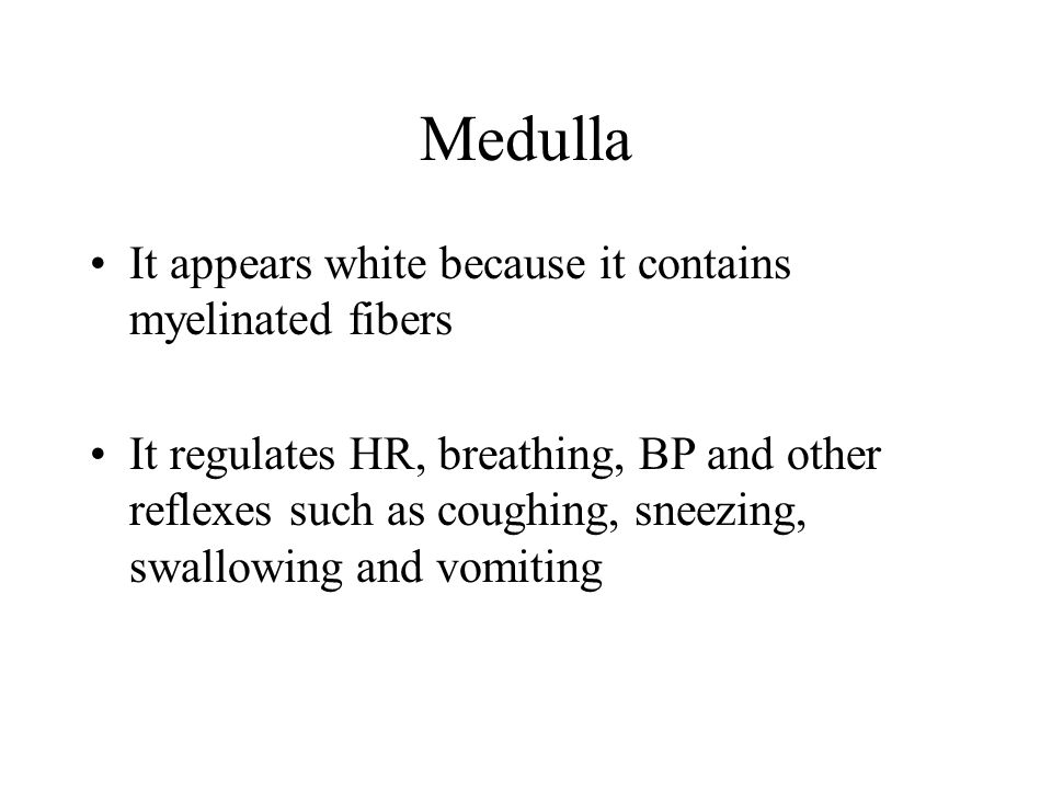 Medulla It appears white because it contains myelinated fibers