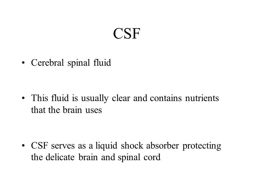 CSF Cerebral spinal fluid