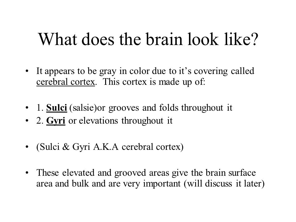 What does the brain look like