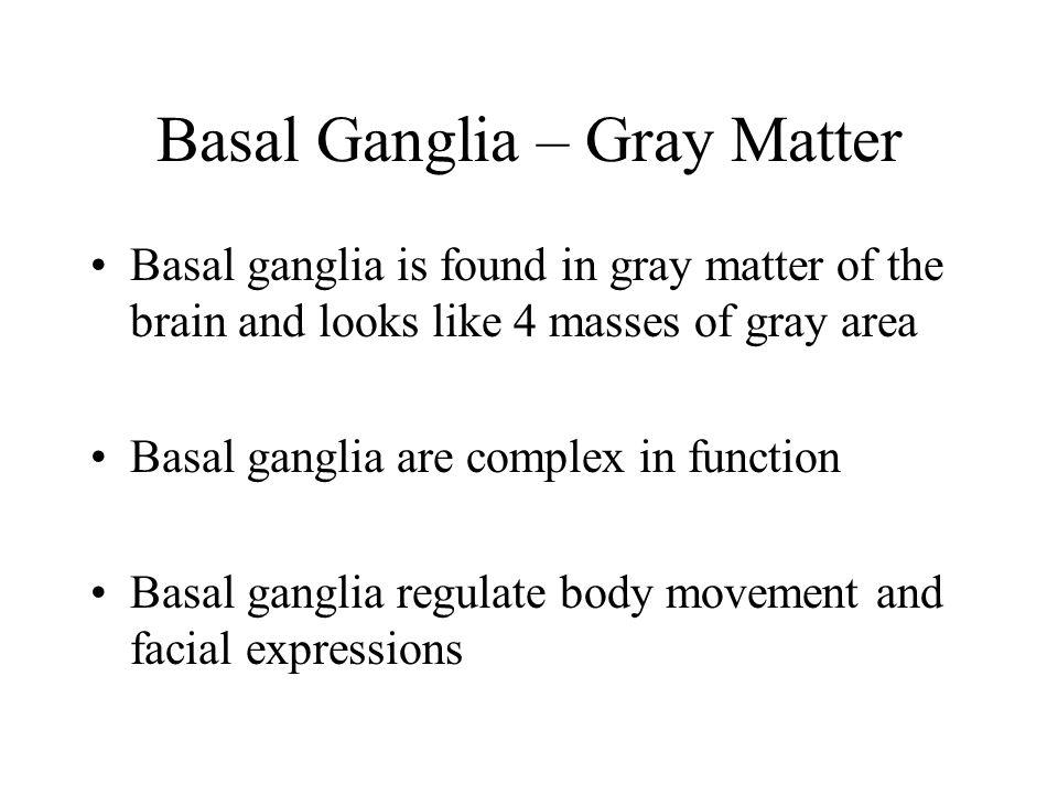 Basal Ganglia – Gray Matter
