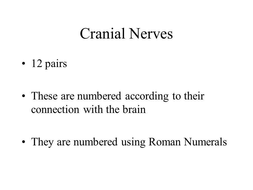 Cranial Nerves 12 pairs. These are numbered according to their connection with the brain.