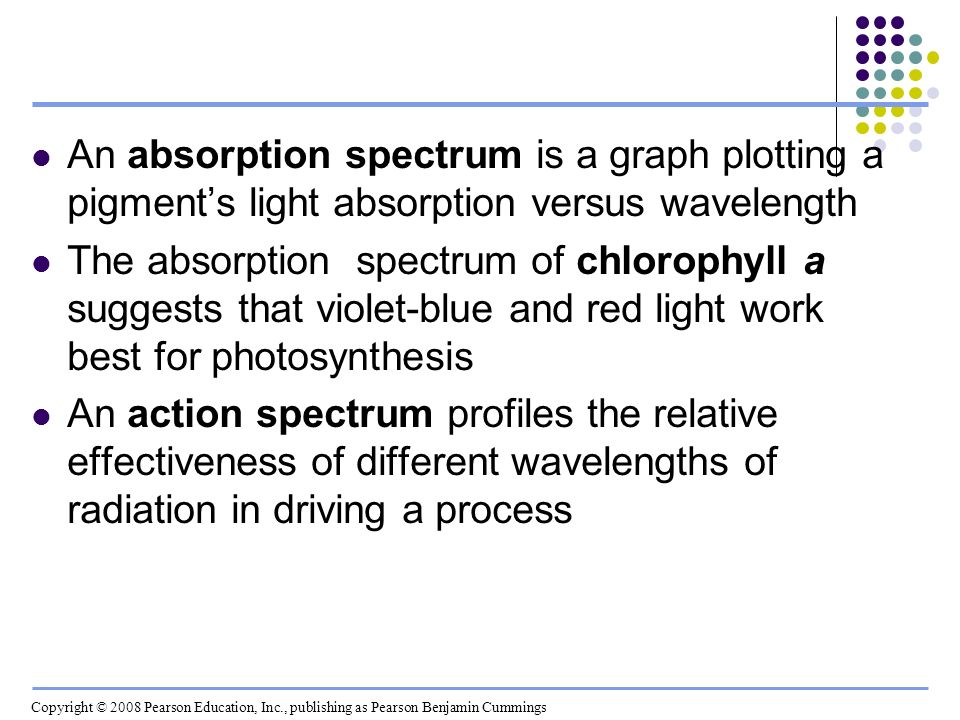 An absorption spectrum is a graph plotting a pigment's light absorption versus wavelength