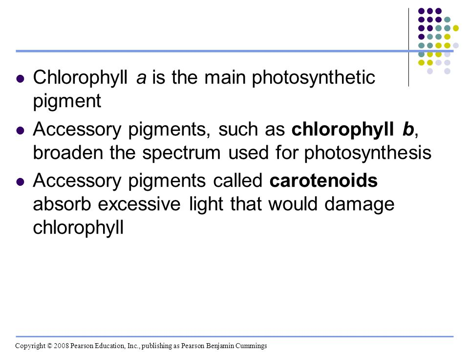 Chlorophyll a is the main photosynthetic pigment