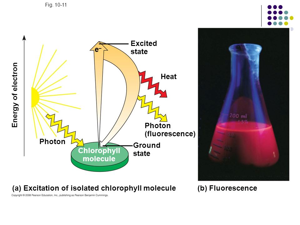 (a) Excitation of isolated chlorophyll molecule (b) Fluorescence
