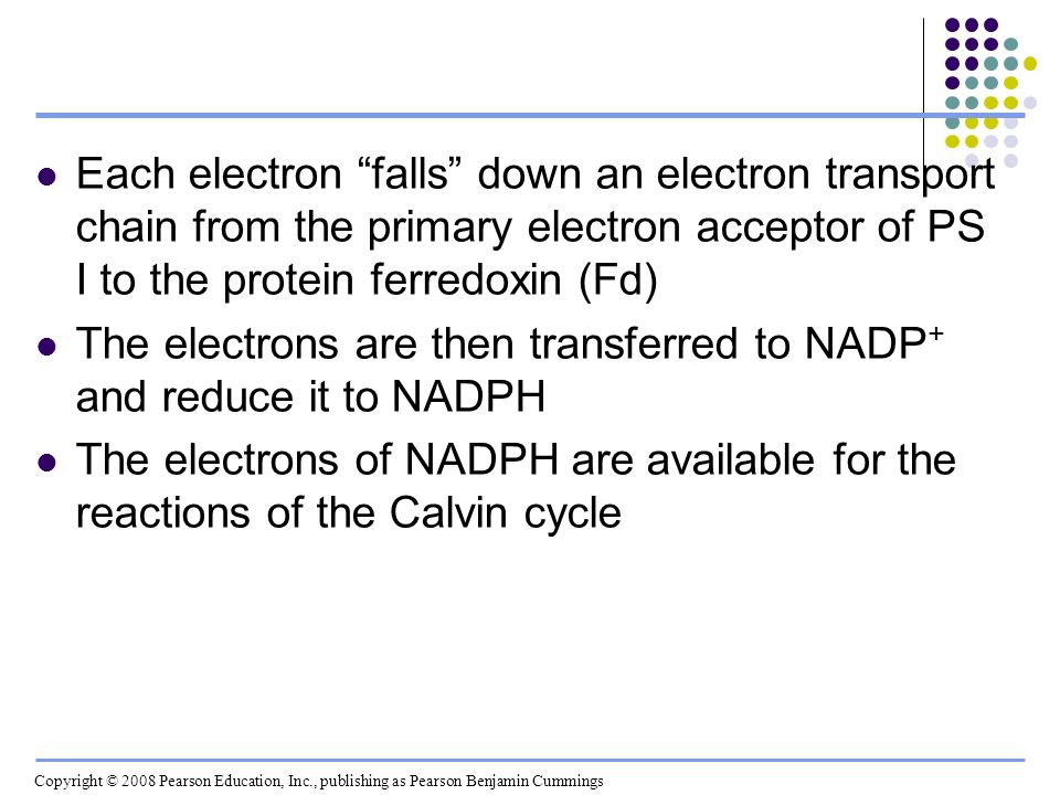 The electrons are then transferred to NADP+ and reduce it to NADPH