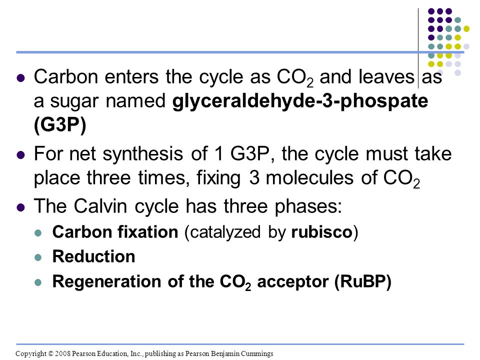 The Calvin cycle has three phases: