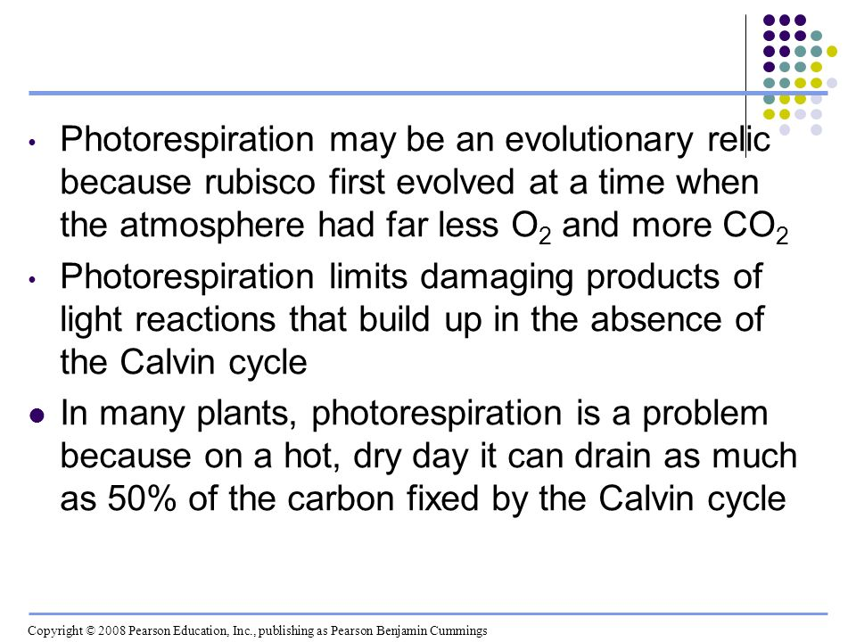 Photorespiration may be an evolutionary relic because rubisco first evolved at a time when the atmosphere had far less O2 and more CO2