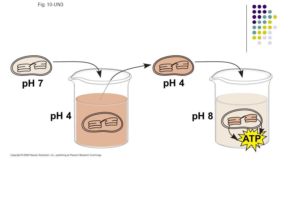 Fig. 10-UN3 pH 7 pH 4 pH 4 pH 8 ATP