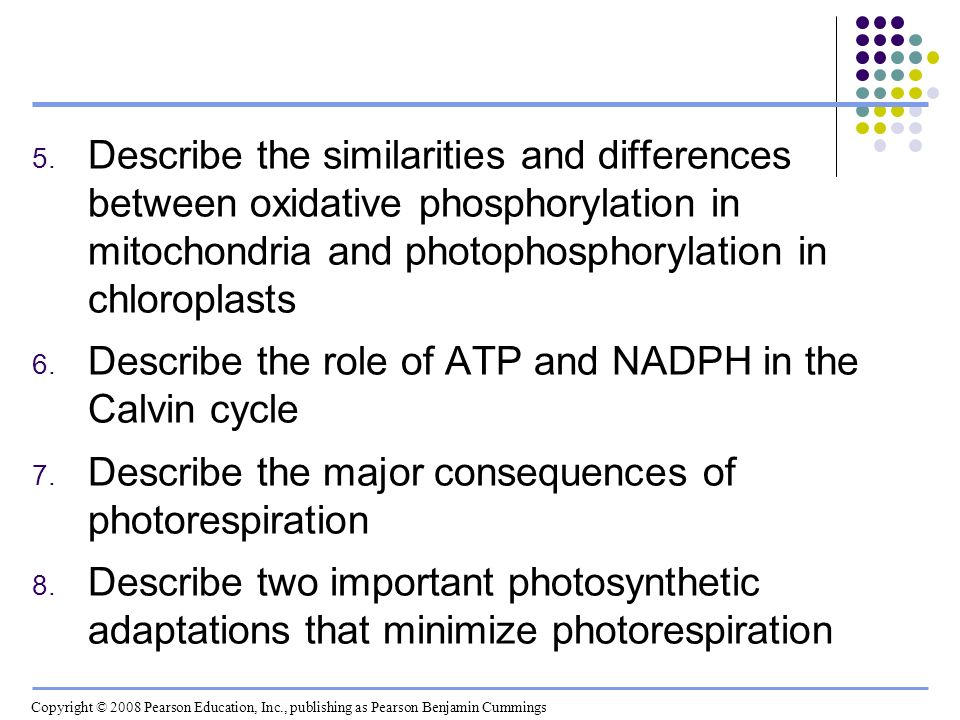 Describe the role of ATP and NADPH in the Calvin cycle