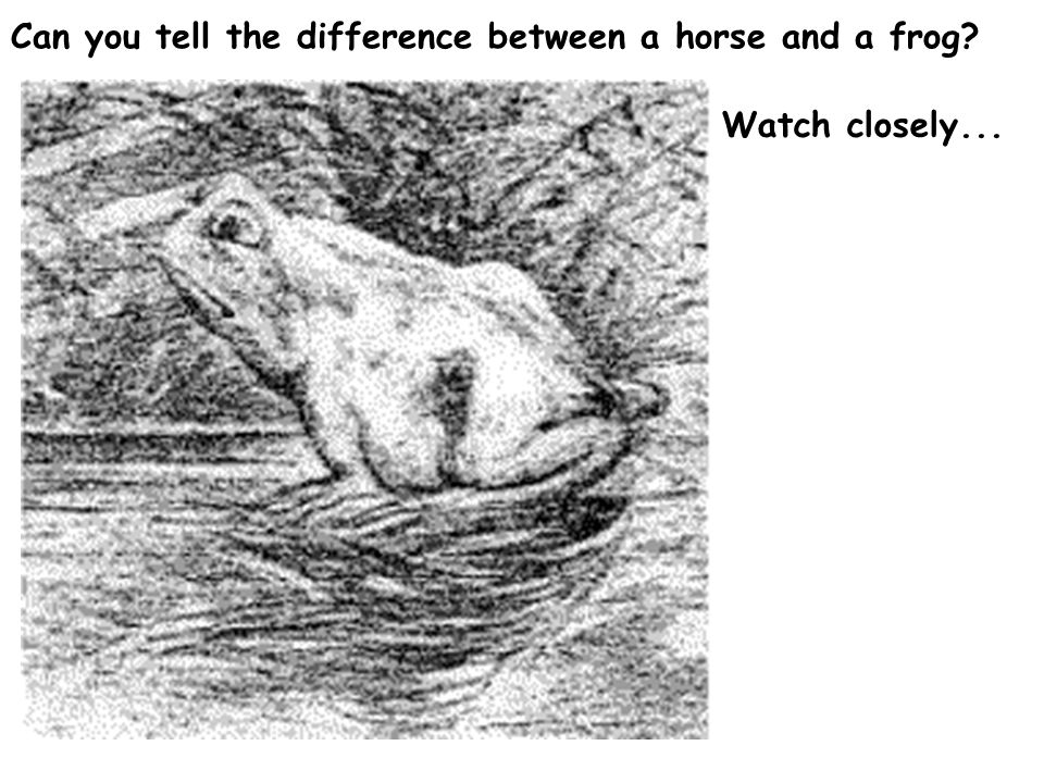 Can you tell the difference between a horse and a frog