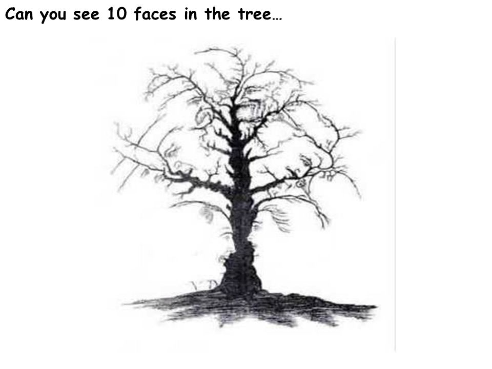 Can you see 10 faces in the tree…