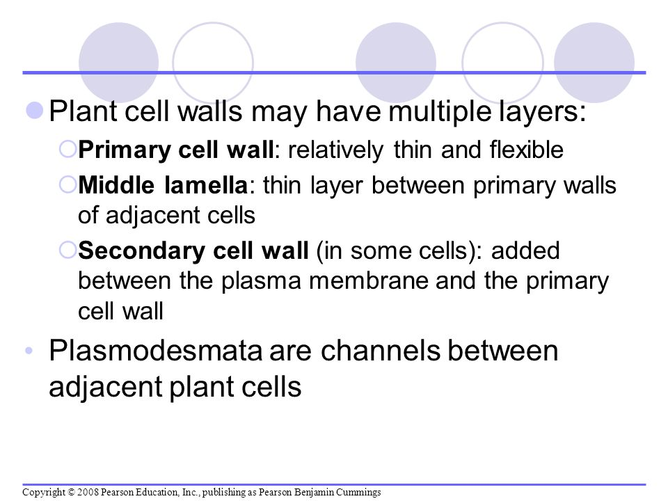 Plant cell walls may have multiple layers: