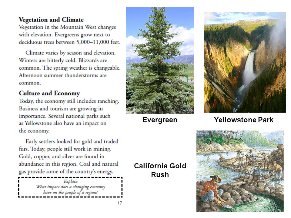 Evergreen Yellowstone Park California Gold Rush