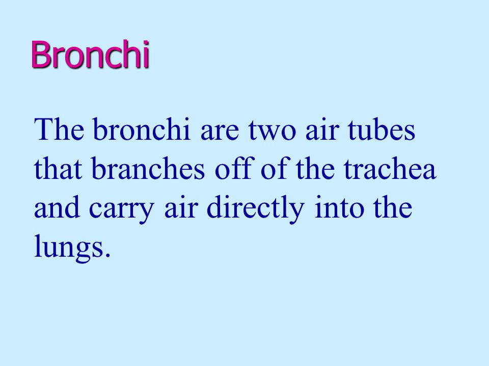Bronchi The bronchi are two air tubes that branches off of the trachea and carry air directly into the lungs.