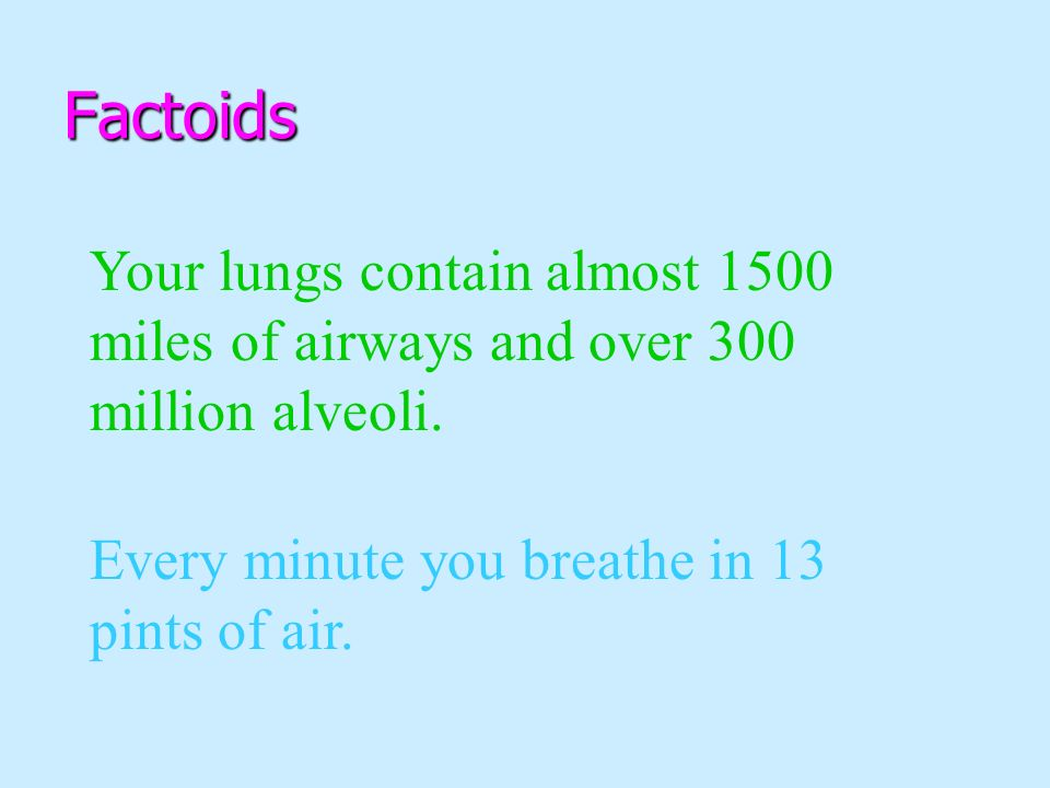 Factoids Your lungs contain almost 1500 miles of airways and over 300 million alveoli.
