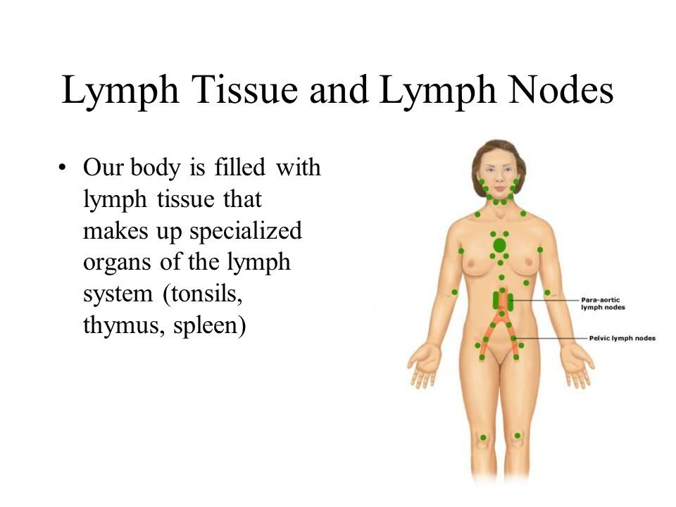 Lymph Tissue and Lymph Nodes