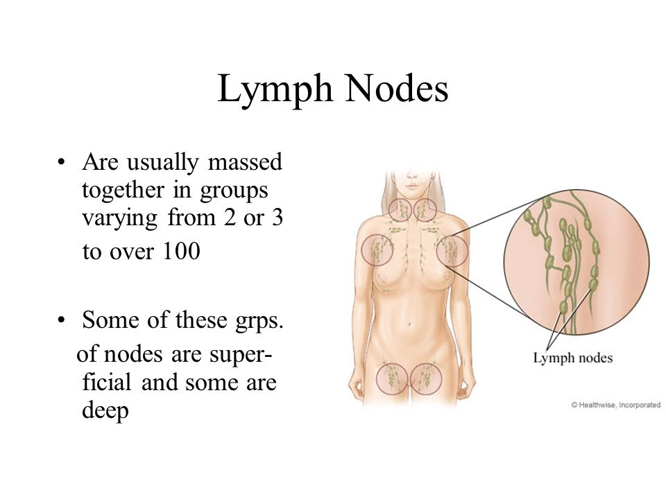 Lymph Nodes Are usually massed together in groups varying from 2 or 3