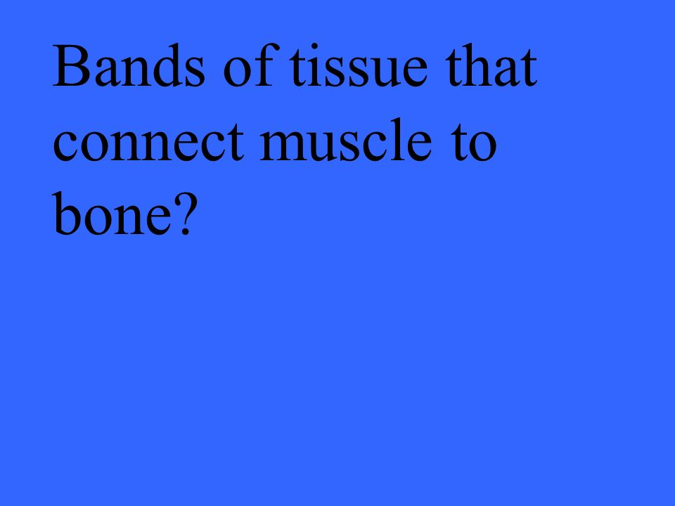 Bands of tissue that connect muscle to bone