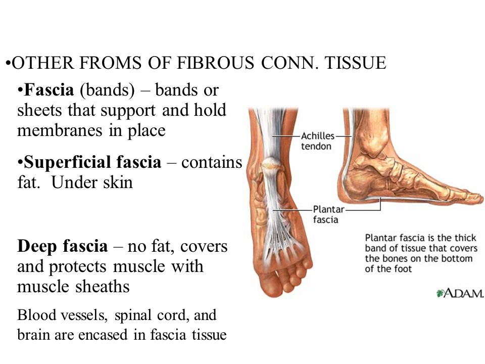 OTHER FROMS OF FIBROUS CONN. TISSUE