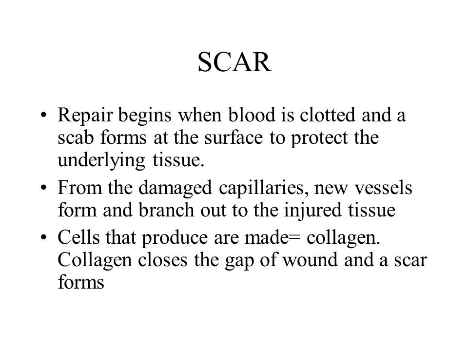 SCAR Repair begins when blood is clotted and a scab forms at the surface to protect the underlying tissue.