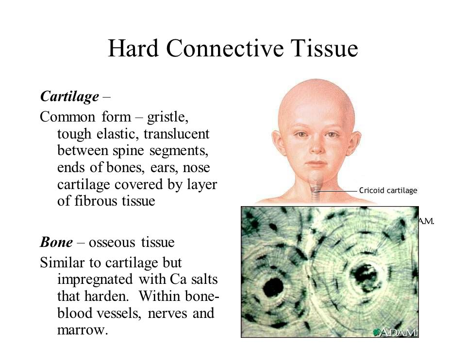 Hard Connective Tissue
