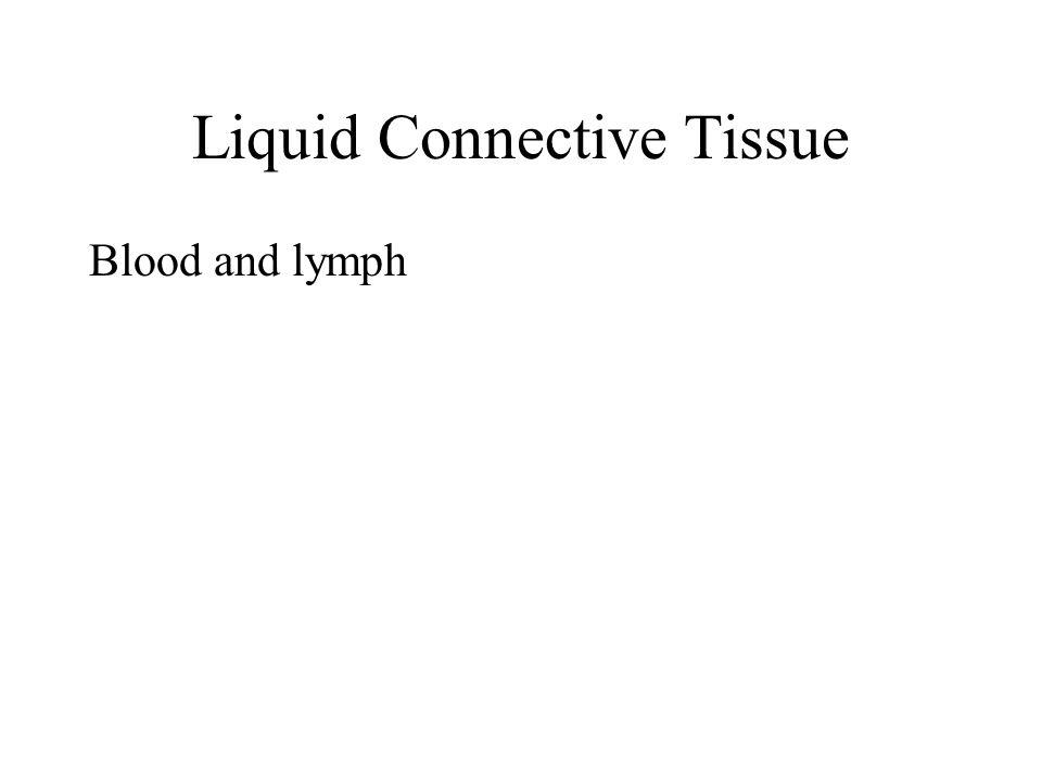 Liquid Connective Tissue
