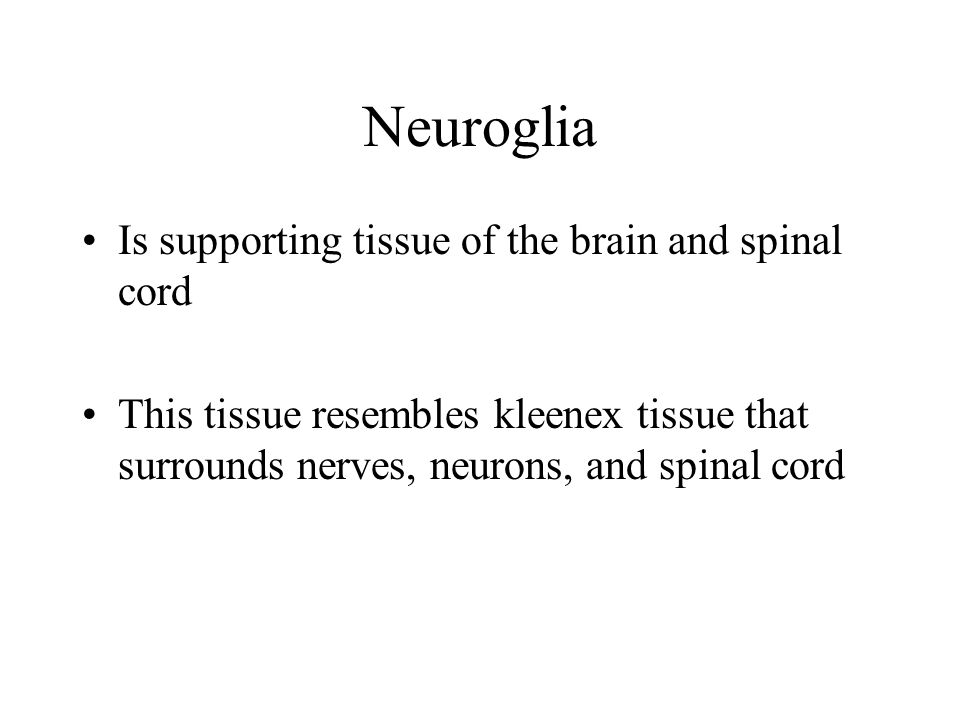Neuroglia Is supporting tissue of the brain and spinal cord
