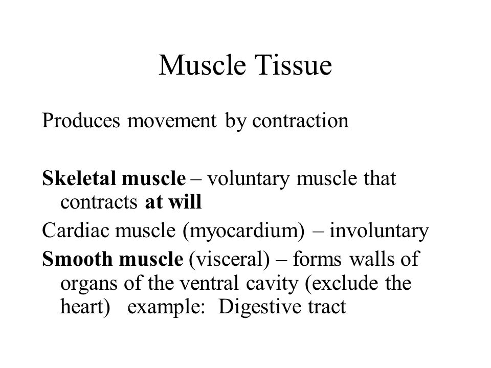 Muscle Tissue Produces movement by contraction
