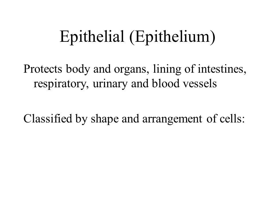 Epithelial (Epithelium)