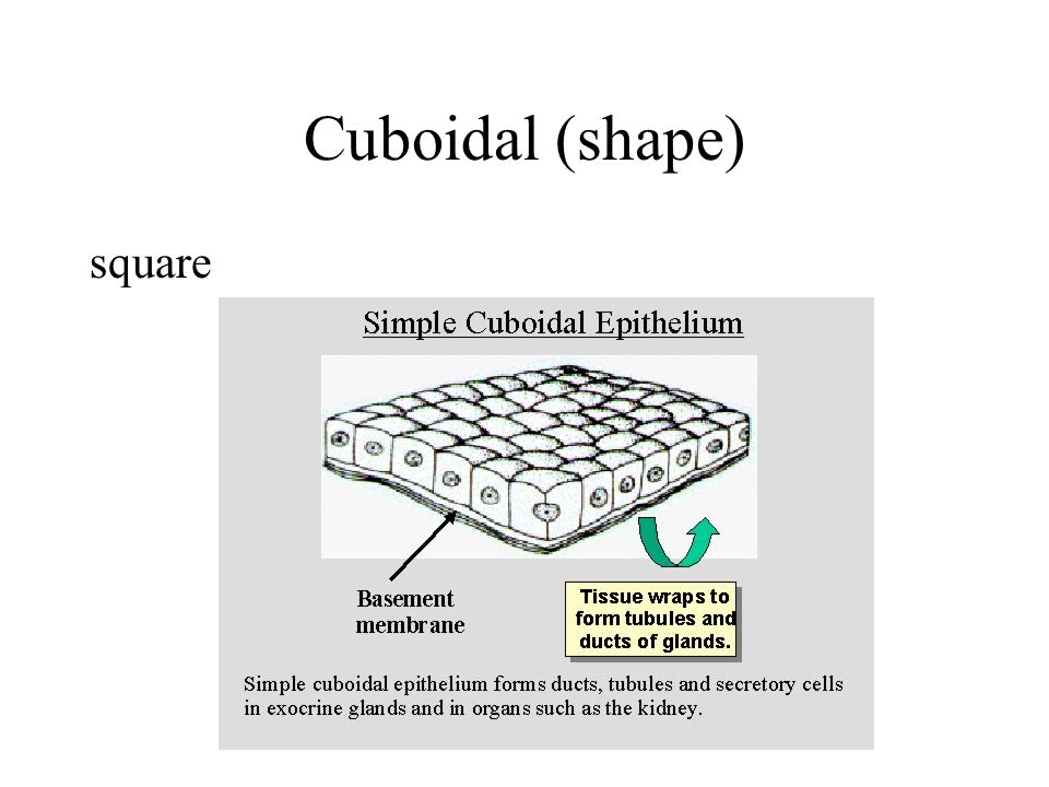 Cuboidal (shape) square