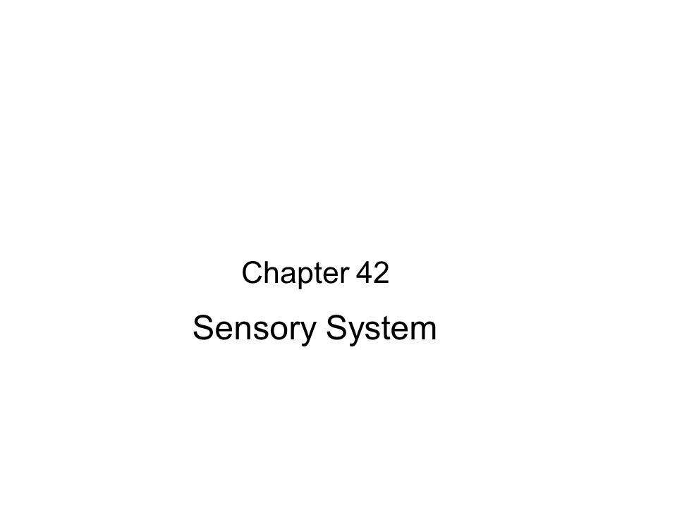 Chapter 42 Sensory System
