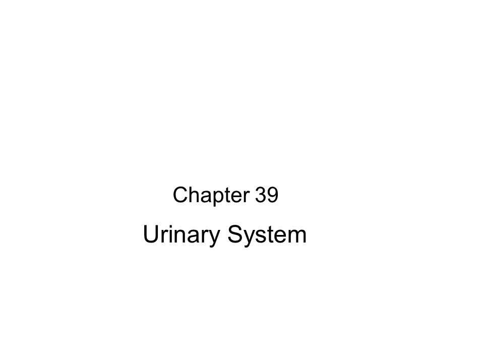 Chapter 39 Urinary System