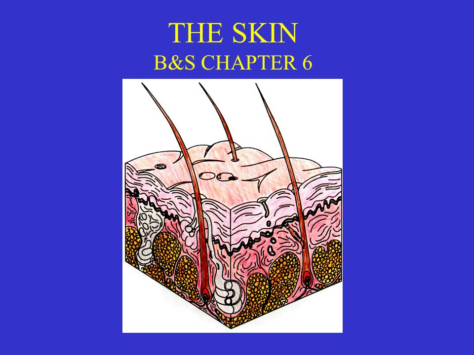 THE SKIN B&S CHAPTER 6