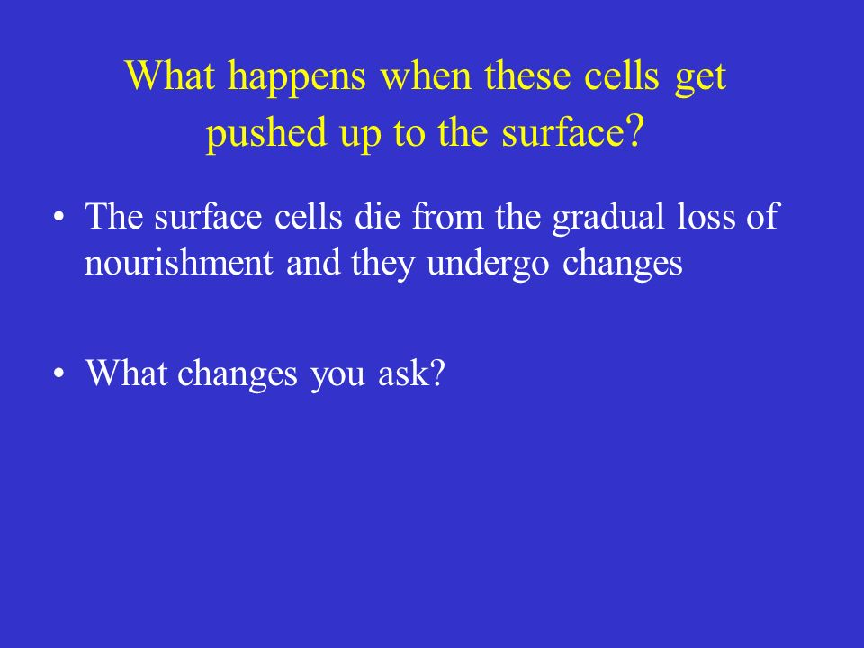 What happens when these cells get pushed up to the surface