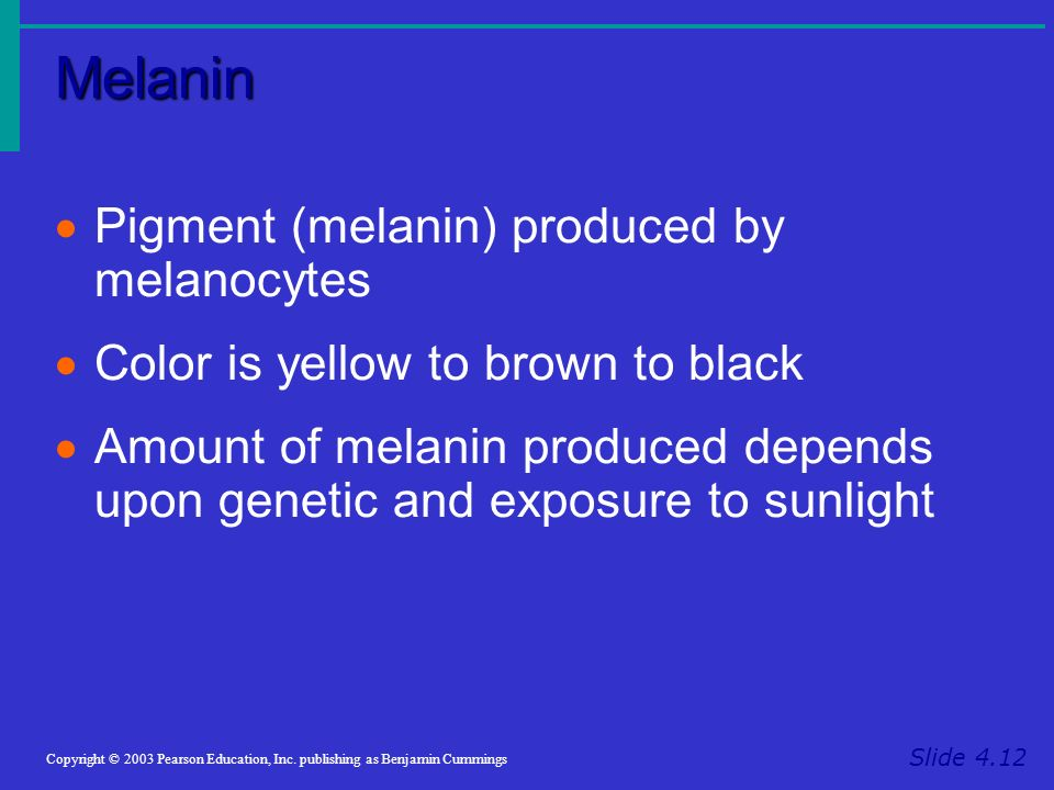Melanin Pigment (melanin) produced by melanocytes